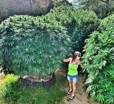 """MzJill— The Only Woman Publicly Known For Professional, Potent Cannabis Seed Breeding and MMJ Activism For Children With Autism - """"It's not just the high, or the pleasures of growing and breeding that motivates us, it's what cannabis can do for people and the planet."""""""