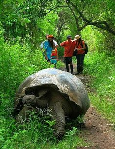 South African Turtle on Trail