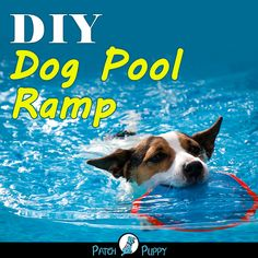 DIY Dog Pool Ramp- Need an easier way for your dog to get out of the pool? Make them this awesome DIY Dog Pool Ramp! Diy Dog Toys, Pet Toys, Dog Pool Ramp, Trimming Dog Nails, Dog Pond, Dog Training Videos, Training Tips, Dog Couch, Dog Ages
