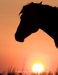 _69T4788AC10 - Wild Horse Sunrise