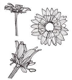 Line Drawing - Flowers 3 Views