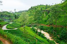 Reiseziel 2017 – Sri Lanka