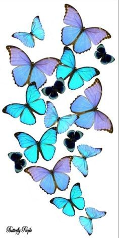 I saw these butterfly arrangements in person and they are awesome!  Wish I could afford one...