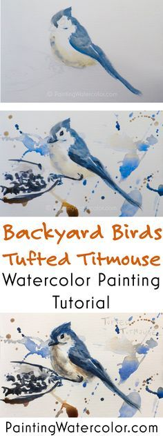 Backyard Bird Sketch, Tufted Titmouse watercolor painting tutorial by Jennifer Branch