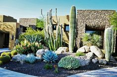Cactus et plantes grasses extérieur pour un jardin facile à décorer