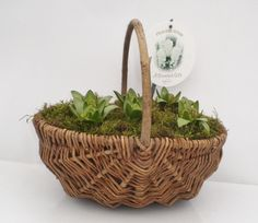 20CM WILLOW TRUG X6 HYA (H86)