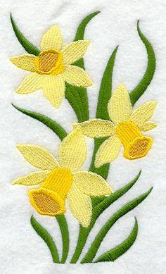 Narcissus Blooms
