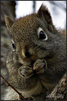 Such an adorable squirrel!!  I love squirrels!!