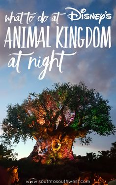 """Have you been to Disney's Animal Kingdom at night yet? We checked it out in June, and I'm sharing some """"must-do"""" night time Animal Kingdom experiences!"""
