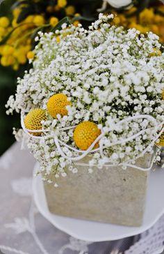 Paniculata y craspedias :: Table centerpiece by Jacqueline Ahne