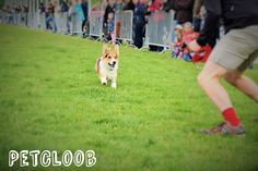 #Hund #Hunderennen