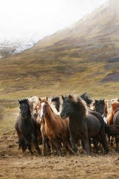 Wild Icelandic Horses. Please also visit www.JustForYouPropheticArt.com for colorful, inspirational, prophetic art and stories. Thank you so much, Blessings!