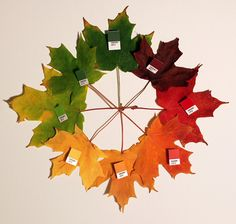 Leaves at all stages, all colors, I love leaves.  30gms – A Visual Digest by Fibre | Pantone 484U Is So Now