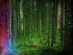 Forest Ghost. Edited National Geographic picture .