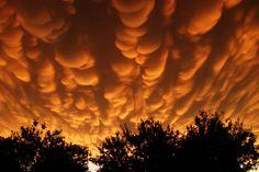 Mammatus  Esta nubes son conocidas como mastodónticas, mammatus, mamma o mammatocumulus.