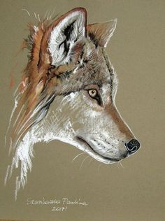 -Wolf Art Print by Paulina Stasikowska. All prints are professionally printed, pa… Wolf Art Print by Paulina Stasikowska. All prints are professionally printed, packaged, and shipped within 3 – 4 business days. Animal Sketches, Animal Drawings, Art Sketches, Art Drawings, Wolf Drawings, Drawing Art, Arte Game Of Thrones, Pastel Art, Wildlife Art