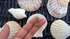 Tumble Stones, Raw Jasper Stone Crystal, Healing #Crystals and Stones, Metaphysical Crystals, Tumbled Stones in Bulk, Jasper 20mm - 40mm  Pick you natural stone and keep it ... #crystals #crystalcluster #healingcrystals #healingstones #naturalstones #clearquartz #druzycrystals #naturalcrystals #gemstones #summer ➡️ http://jto.li/cyw2B