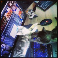 We wanna play