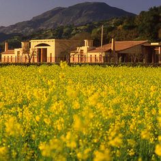 Clos Pegase winery, Calistoga