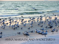 Shorebirds on the North end of the island