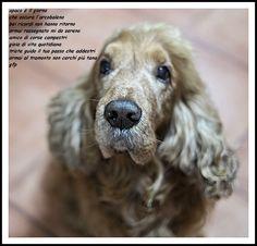 dedicato al mio amico canide, ormai cieco da un'anno