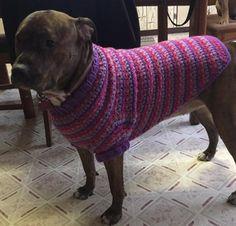 Crochet Large Dog Coat   Craftsy Free Pattern