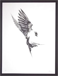 """Here's an absolutely stunning set of art prints from Von. Titled """"Flight"""", and exploring the unique anatomy of birds tattoo? Future Tattoos, Love Tattoos, Beautiful Tattoos, New Tattoos, Tattoo Arm Mann, Phenix Tattoo, Tattoos Lindas, Vogel Tattoo, Sparrow Tattoo"""