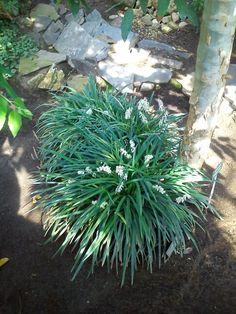 :) Flora, Herbs, Plants, Herb, Plant, Planting