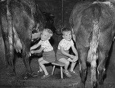kids milking cows  fotos arte de granja fotografía vintage