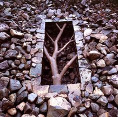 "Andy Goldsworthy - ""…I take nothing out with me in the way of tools, glue or rope, preferring to explore the natural bonds and tensions that exist within the earth…each work is a discovery."""