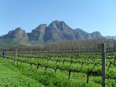Vineyards at Franschoek, South Africa