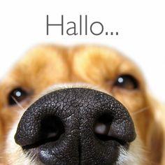 Grappige close up van een hond. Lief toch? Design: Kaartje2go. Te vinden op: www.kaartje2go.nl