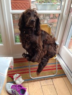 Dogs that behave like humans - Milo and his chair