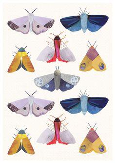 Moth Study illustration by Lianne Harrison