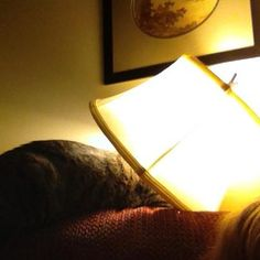 Wasabi with her head in the lamp