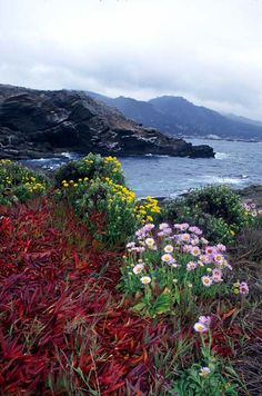 Coastal Wildflowers, Point Lobos, California - One of my favorite places on earth! Oh The Places You'll Go, Places To Travel, Wonderful Places, Beautiful Places, California Wildflowers, California Dreamin', Beautiful Landscapes, Beautiful World, The Great Outdoors