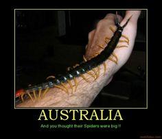 Australian Spiders | australia-australia-spiders-big-critters-centipede-demotivational ...