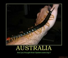 AUSTRALIA - And you thought their Spiders were big !!  Australia spiders big critters centipede