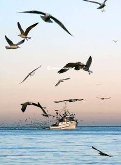 Morning return http://ift.tt/1H4gdx4 beautifulblueboatboatscloudsfisherfishermanfishingfishing boatslightoceanseaseagullsseascapeskysunsunrisetravelwater