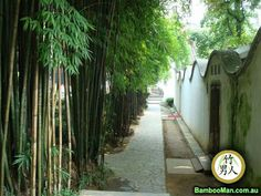 Better Homes and Gardens Clumping bamboo hedge