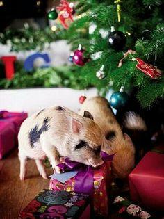"Merry Christmas! ""Where's mine?!"""