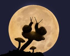 Photography art of Snail couple in moonlight. by AnInspiredLens