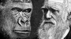 Is er bewijs voor de evolutietheorie van Charles Darwin?
