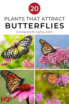 Plants That Attract Butterflies, Butterfly Plants, Butterfly Bush, Flower Plants, Monarch Butterfly, Amazing Gardens, Beautiful Gardens, Small Water Features, Hummingbird Garden