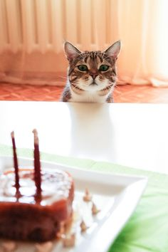 """* * """" WUT is dat? A special foods temple? I haz to knowz."""""""
