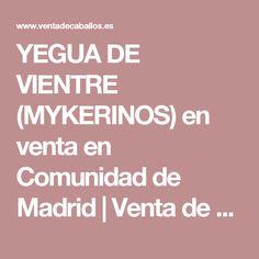 YEGUA DE VIENTRE (MYKERINOS) en venta en Comunidad de Madrid | Venta de Caballos