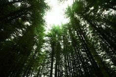 Forest Clearing by Stephen_G, via Flickr