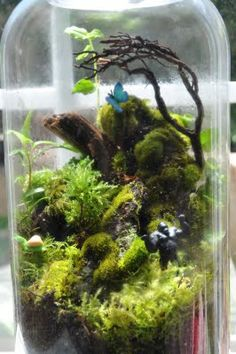 terrarium with blue butterfly for him and some toy dino for baby :) would deff make me smile everytime