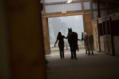 Visit the horses at our beautiful Equestrian Center.