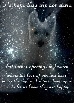 pin found on a board by Joanie S originally posted in remembrance of her Westie, Woodie the Braveheart All Dogs, I Love Dogs, Puppy Love, Animal Quotes, Dog Quotes, Dog Poems, Animal Poems, Qoutes, Dog Sayings